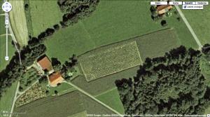 hanf-plantage